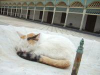 Maroc59