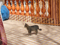 Maroc244