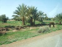 Maroc293_2