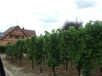 Alsace5