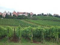 Alsace65