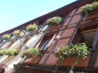 Alsace236