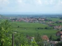 Alsace250