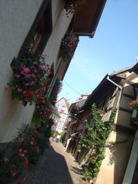 Alsace141