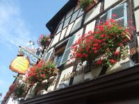 Alsace176