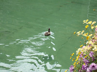 Annecy32